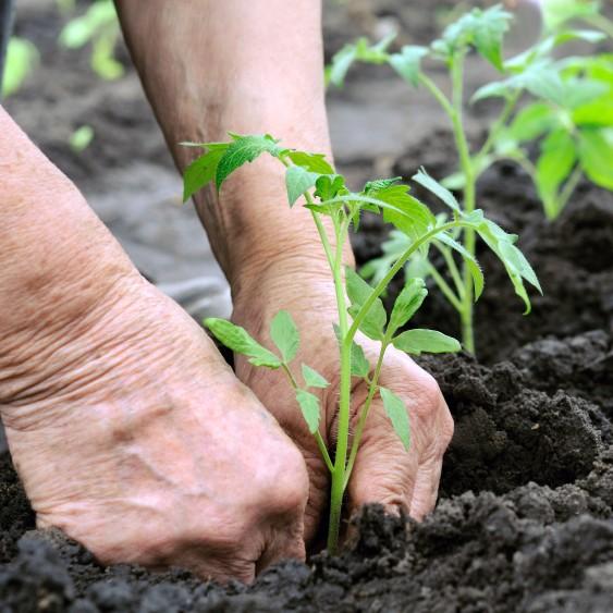 Je boek is als een tuin: leer organisch schrijven